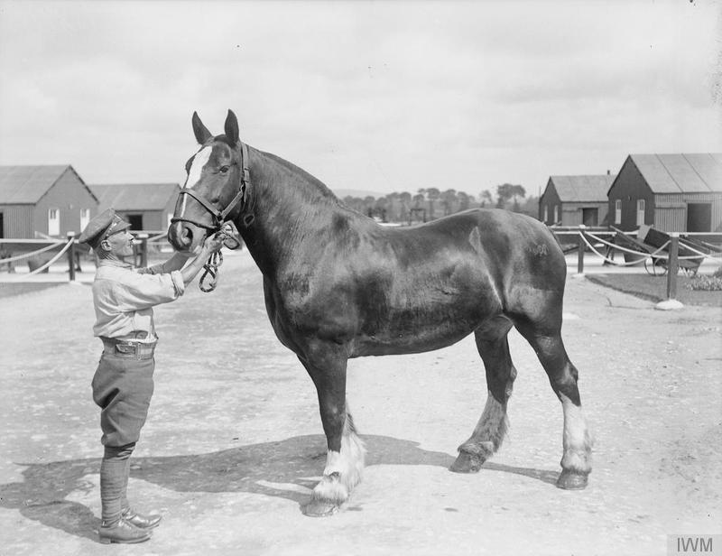 war horse raises funds for threatened ww1 stables first